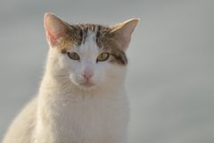Cat looking at you Stock Photography