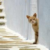 Cat looks around a corner Stock Photo
