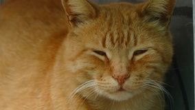 Cat Looks Away rossa archivi video