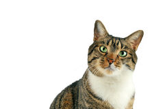 Cat looks at camera Stock Images