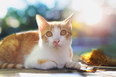 Cat looks at the camera. Stock Image