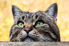 A cat looks curiously over a fence Stock Image