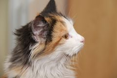 The cat looks different. profile. Of the cat royalty free stock photo