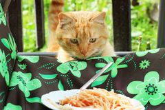Cat looks at the food in the plate.  stock photography
