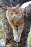 Cat looks forward sitting on the tree close up. Outdoor Royalty Free Stock Images