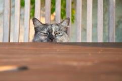 Cat that looks hidden ago Stock Images
