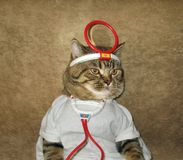A cat is a doctor. stock photos