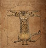 Da Vinci Cat royalty free stock images