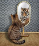 Cat looks at his reflection 2. The cat looks at in the mirror. It sees the reflection of a tiger there stock photography