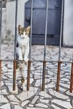 Cat looks out from behind the fence. Cute cat. Montenegro. Summer stock images