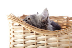 The cat looks out of a beige wattled basket. Stock Photography