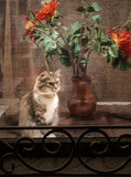 The cat looks out through the glass. The cat looks out through the glass on the background of a red flower Stock Photography