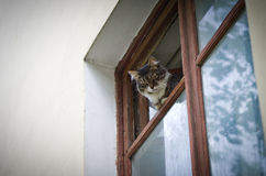 Cat looks out of the window. Royalty Free Stock Photo