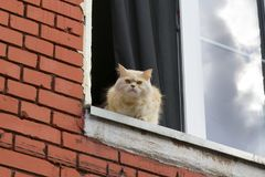 Cat sits on the window. Cat looks out of the window of the house Royalty Free Stock Photo