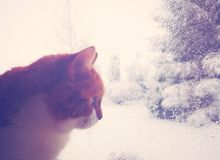 Cat and winter royalty free stock photo