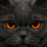 Cat looks strange look in the night Royalty Free Stock Images