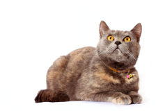 Cat looks up Royalty Free Stock Photo