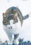 Cat looks Stock Image