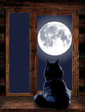 Cat looks through the window at the full moon. Cat sit by the wooden windowsill in moonlight and looking at full moon Royalty Free Stock Images