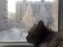 Cat looks into the window Royalty Free Stock Photo
