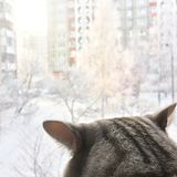 Cat looks into the window Royalty Free Stock Image