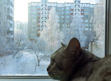 Cat looks into the window Stock Photo