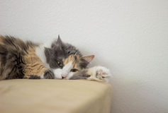 Cat Lounging Royalty Free Stock Images
