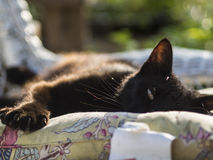 Cat lounging in the sun on a cushion. Royalty Free Stock Photography