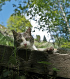 Cat - lovely kitty. Within a beautiful summer scenery Stock Image