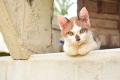Cat Lover. At my home Royalty Free Stock Photos