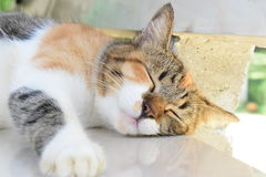 Cat Lover. At my home Royalty Free Stock Photography