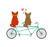 Cat lovers on tandem. Lover  of cycling. Joint walk on street. P. Et Romantic date. Cats lifestyle Stock Image