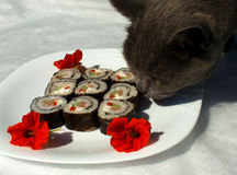 Cat loves sushi. On the white background Stock Photo