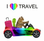 Cat loves to travel. The cat in the rainbow car loves to travel. White background stock photo