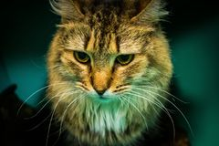 Cat Loving-Haus Lizenzfreie Stockbilder