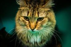 Cat Loving-huis royalty-vrije stock afbeeldingen