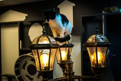 Cat Loving-huis stock fotografie