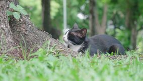 Cat in The Lumpini Park, Bangkok. Video of Cat in The Lumpini Park, Bangkok stock video footage