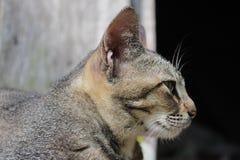 Cat lurk prey Stock Photo
