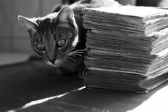 Cat lurking behind pile of books. Grey cat lurks behind of a pile of old books Royalty Free Stock Images