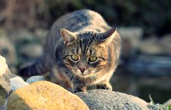 Cat lurking. On the garden Stock Photography