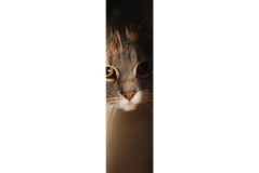 Cat lurking. The cat lurking and want to come in the room stock photography