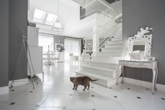 Cat in luxury interior Royalty Free Stock Photos