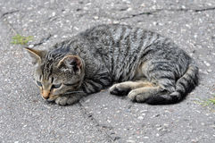 Cat lying royalty free stock photography