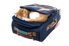 Cat lying asleep in your pocket bag Royalty Free Stock Photo
