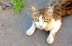 Cat is lying on the asphalt Royalty Free Stock Image