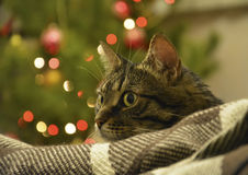 Cat lying on a background of colored lights, bokeh Royalty Free Stock Photos