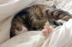Cat lying in bed Royalty Free Stock Photography