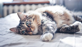 Cat lying on bed Stock Photos