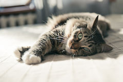 Cat lying on bed Stock Images